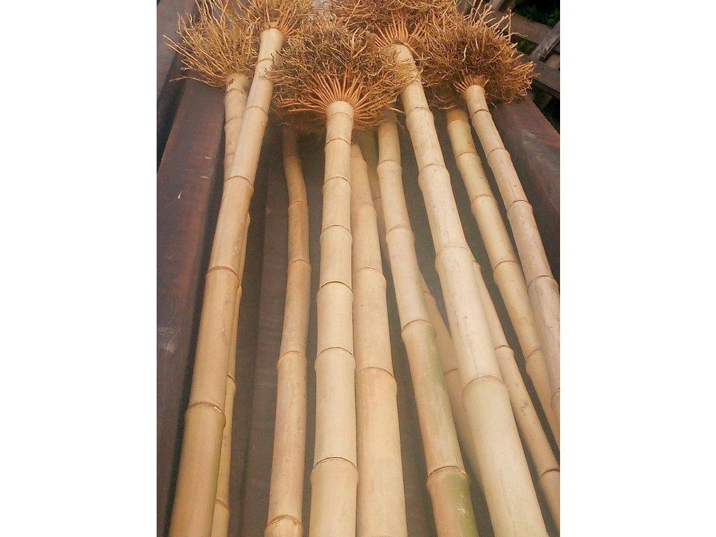 SHAKUHACHI Bambusová tyč 30/50mmx135cm
