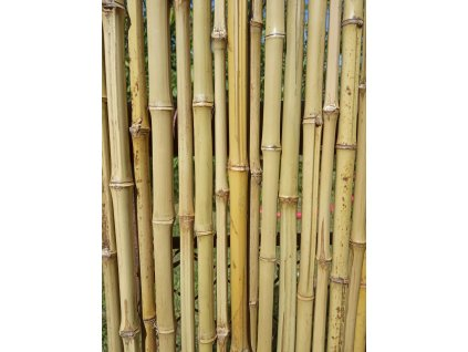 Bambusový plot MULTIPLEX,prům.10-20mm, v.200xš.200cm