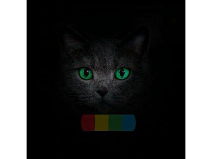 kot brytyjski zielone oczy
