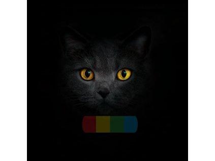 kot brytyjski zolte oczy 3