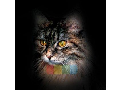 kot dlugie wlosy zolte oczy