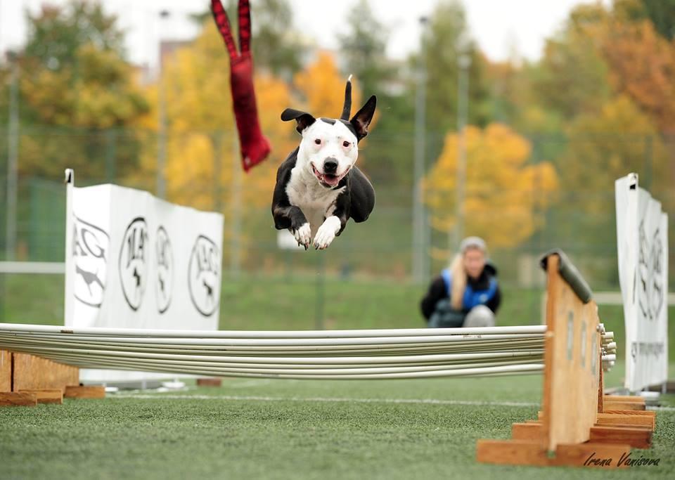 long jump - Krayta závodí