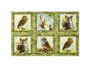 Owls of Wonder Panel