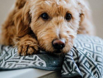 Bavlněná osuška pro psy Labbvenn Linaa