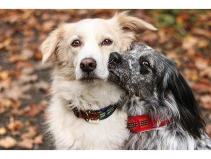 Obojek pro psa Buddys Etna modrý