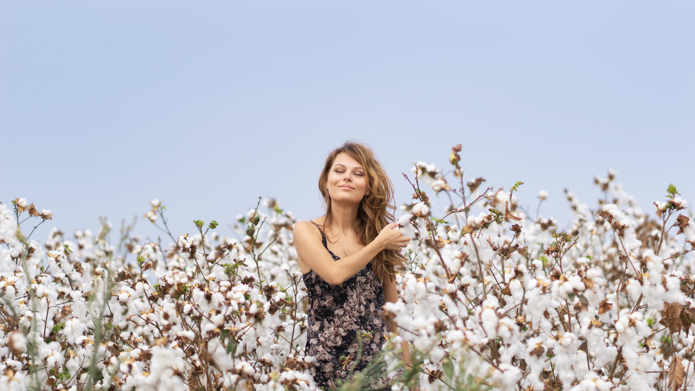 Jak se pěstuje bavlník