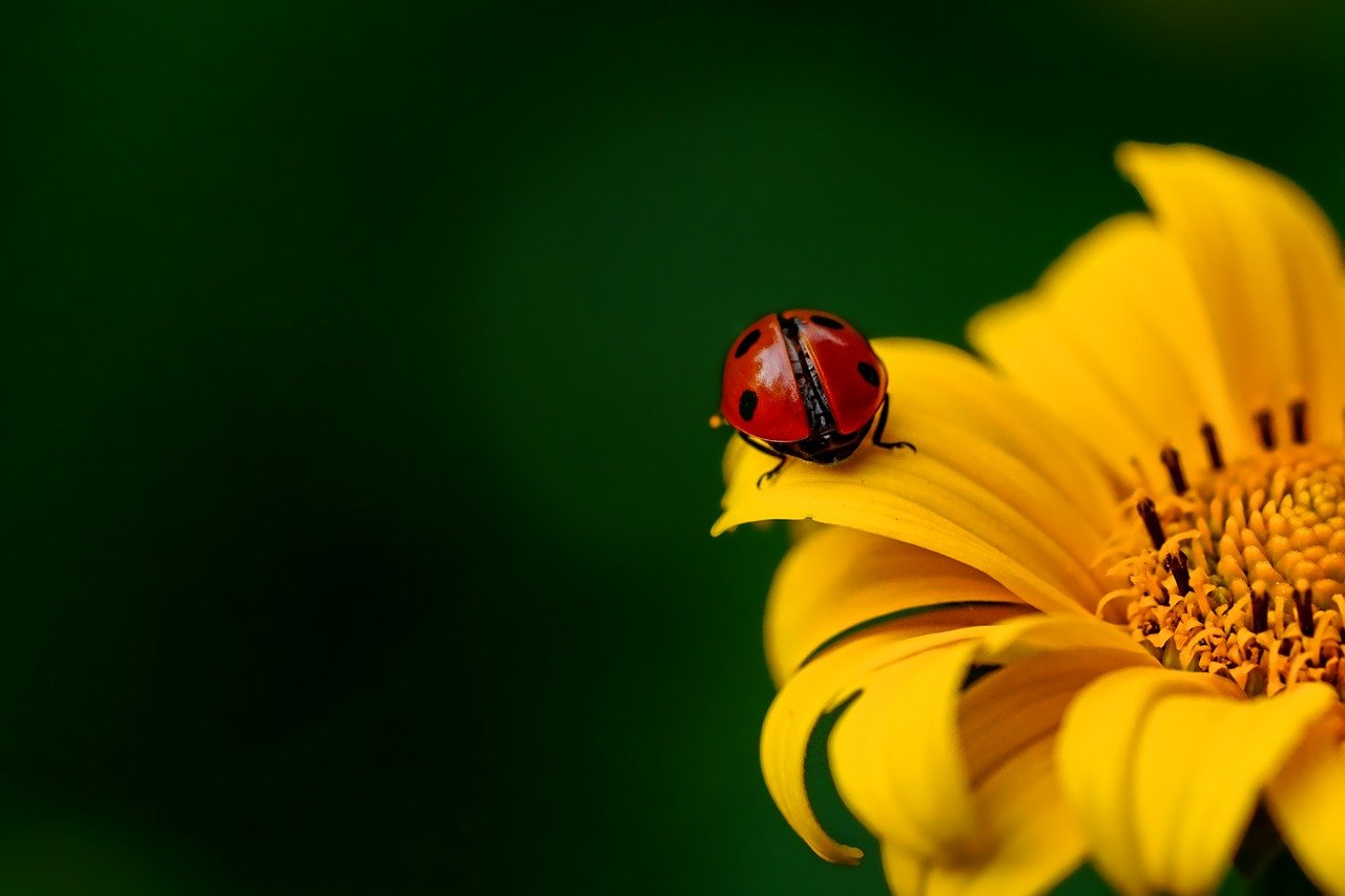 ladybug-3475779_1280