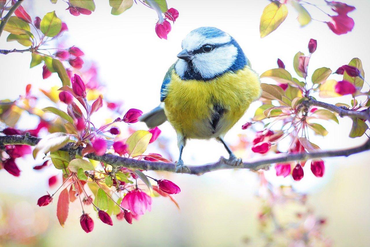 spring-bird-2295434_1280
