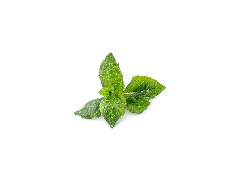 Lingot se semeny máty pro chytré květináče Véritable