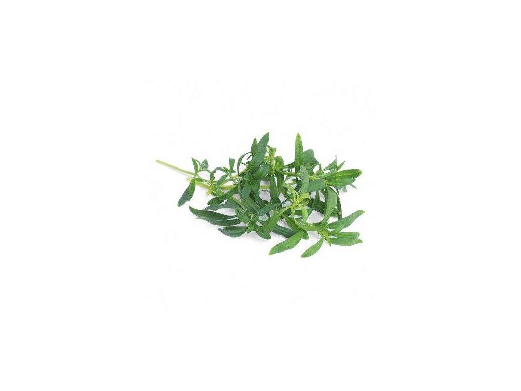 Lingot s BIO semeny saturejky horské pro chytré květináče Véritable