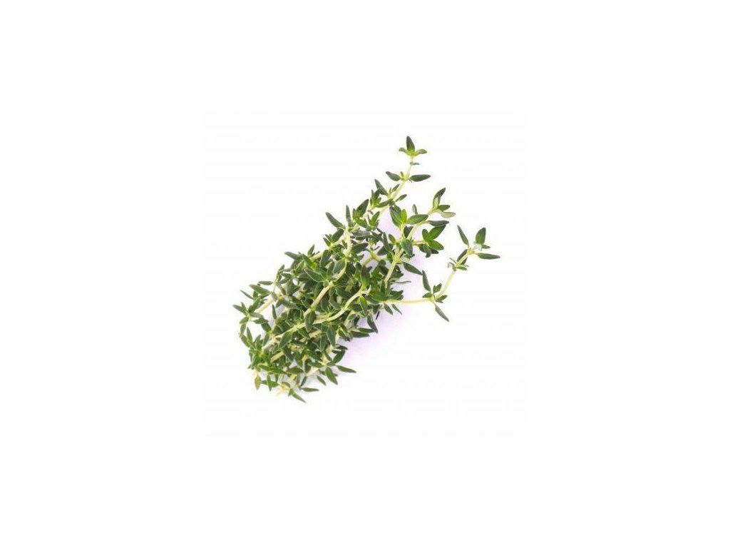 Lingot s BIO semeny tymiánu pro chytré květináče Véritable