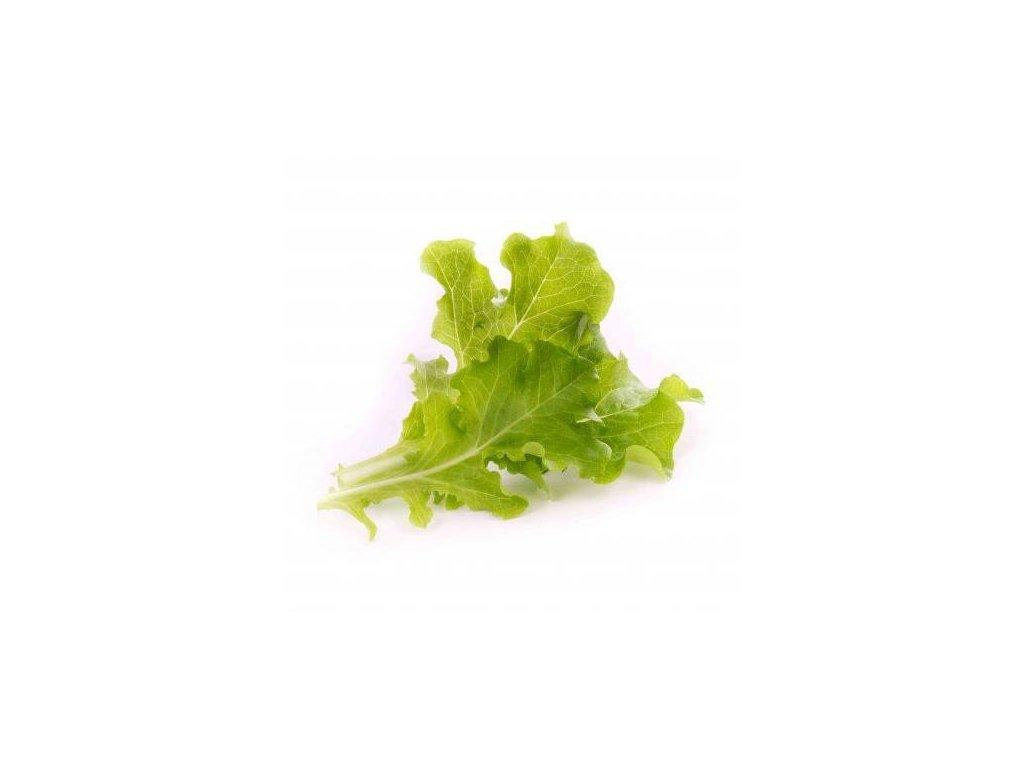 Lingot s BIO semeny dubového salátu pro chytré květináče Véritable
