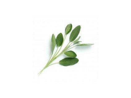 Lingot s BIO semeny šalvěje pro chytré květináče Véritable