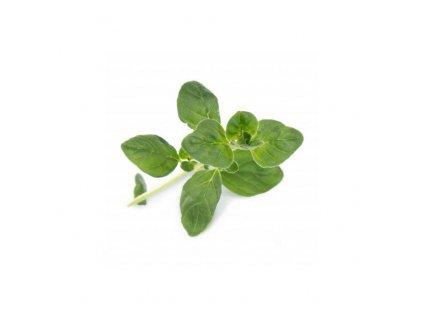 Lingot s BIO semeny oregana pro chytré květináče Véritable