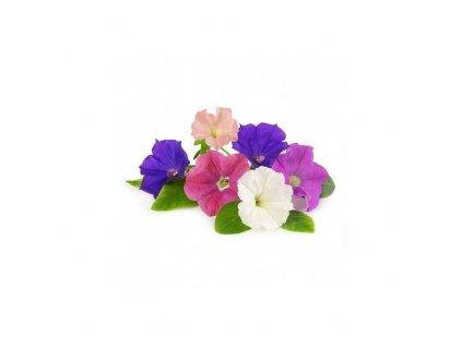 Lingot se semeny petúnií pro chytré květináče Véritable