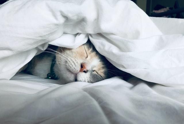 spánek_1