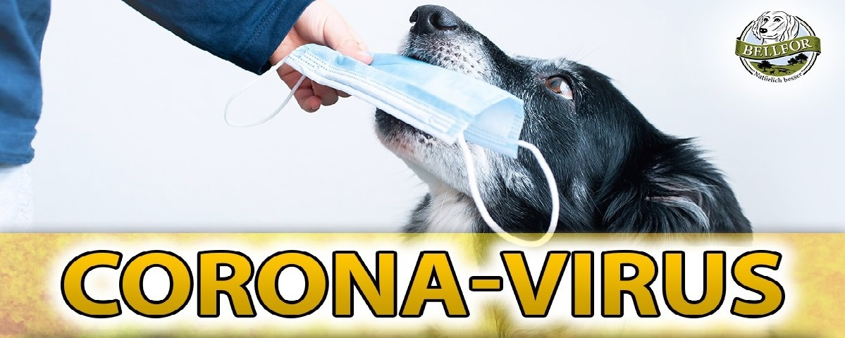 Coronavirus u psů