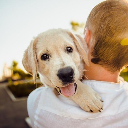 Vhodné krmení pro dlouhý a zdravý život psa