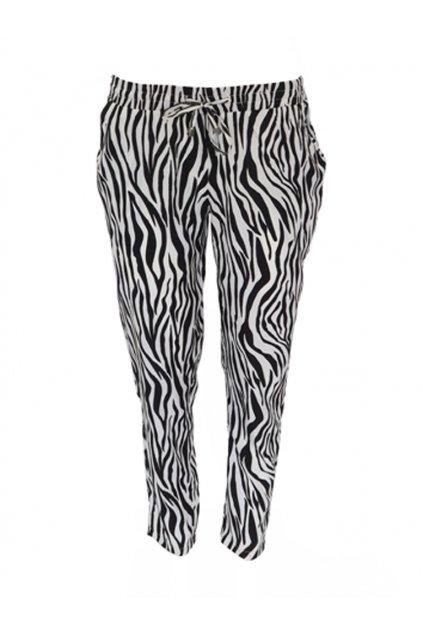 Harémky zebra Morgan