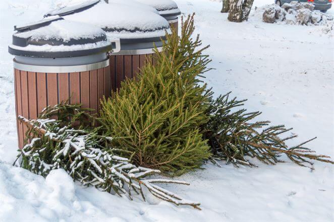 kde_koncia_zive_vianocne_stromceky