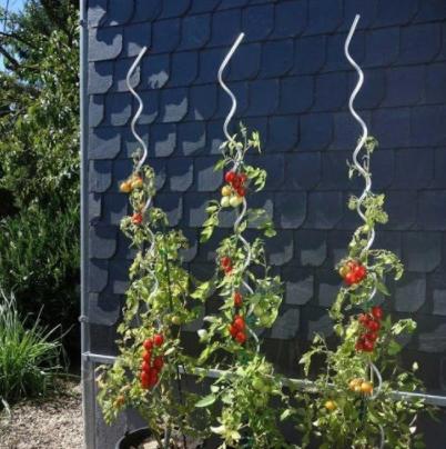 spiralove_tyce_na_paradajky(6)