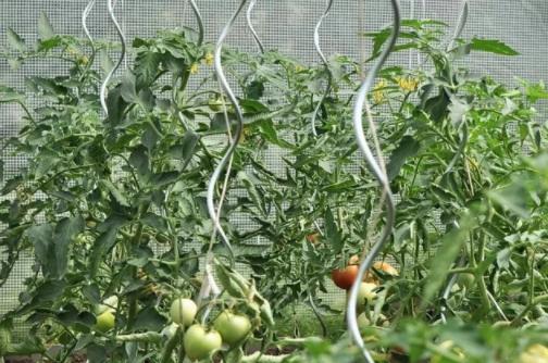 spiralove_tyce_na_paradajky(7)
