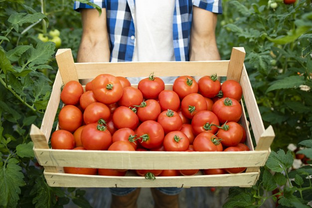 close-up-view-wooden-crate-full-red-tasty-tomato-vegetables_342744-1392