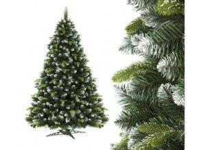 vianočný borovica