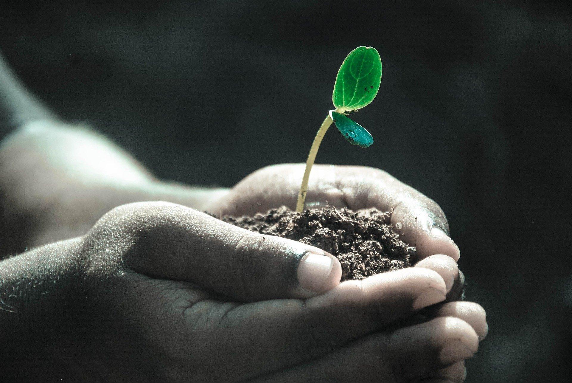 Stresové faktory rostlin