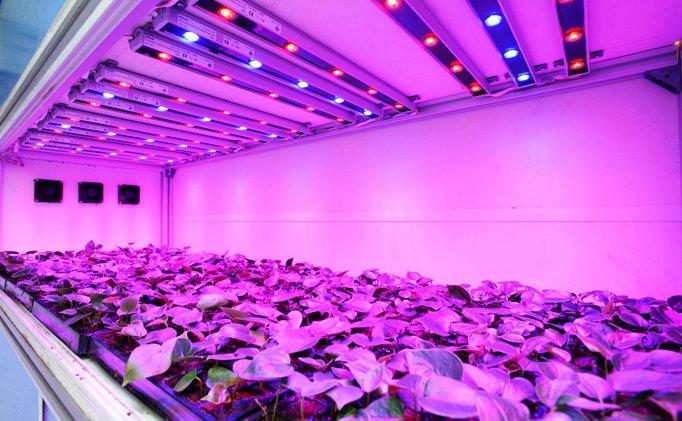 Výhody Led pěstování