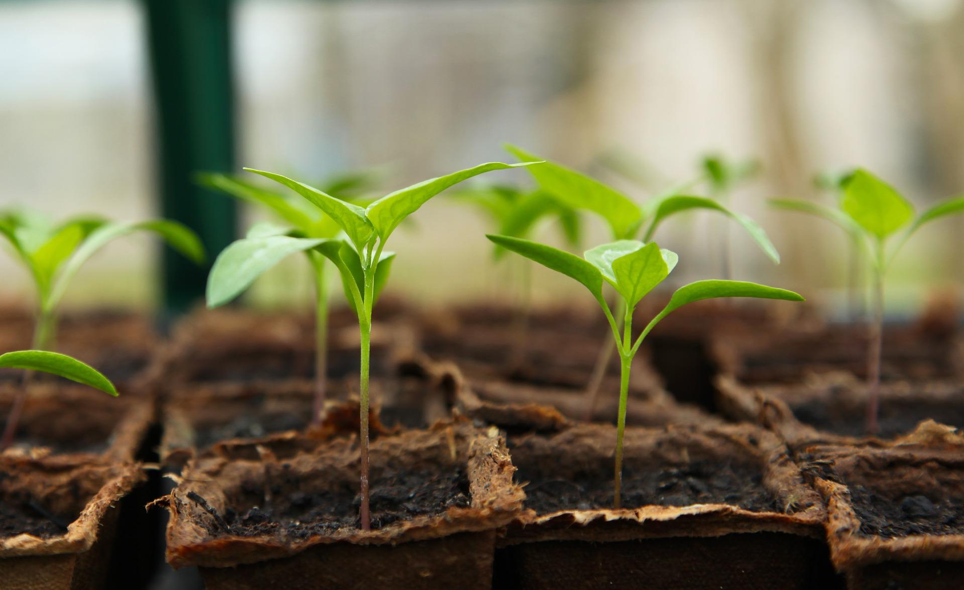 Ideální místo v domě pro pěstování