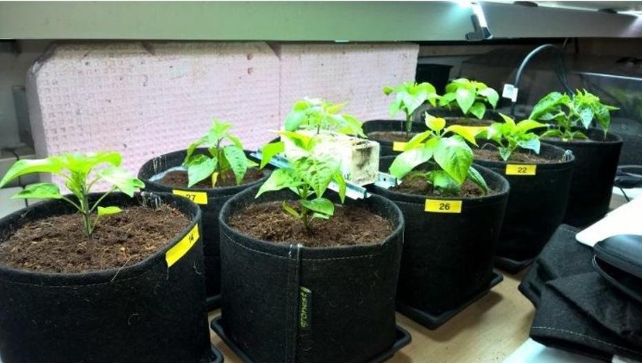 Pěstování v textilních květináčích