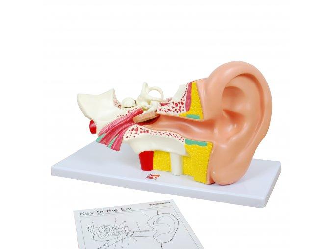 Human Ear / Lidské ucho