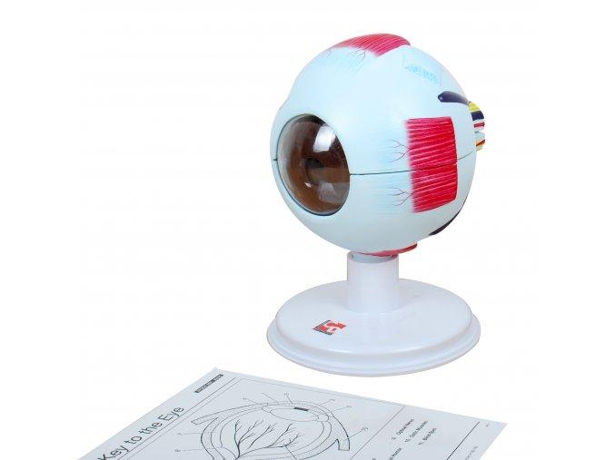 Human eye / Lidské oko