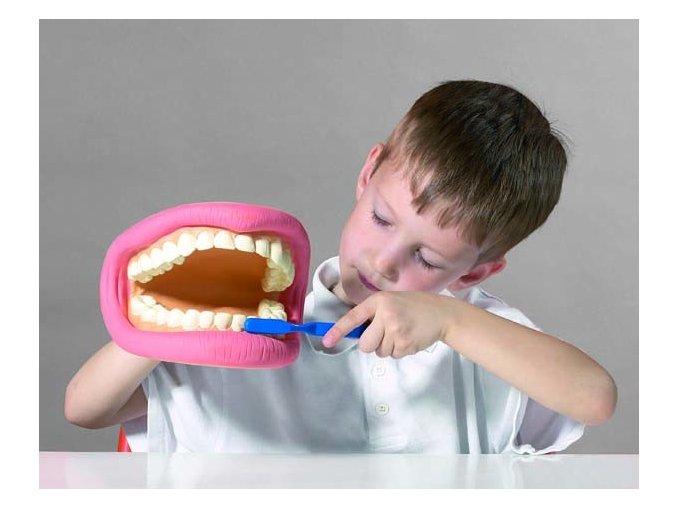 Obří zuby a kartáček (Giant teeth demonstration set)