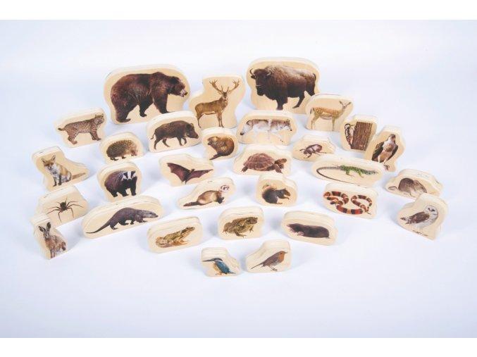 Dřevěná divoká zvířátka  / Wooden forest animal blocks