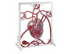 PUMPING HEART MODEL / Lidské srdce - srdeční tep model