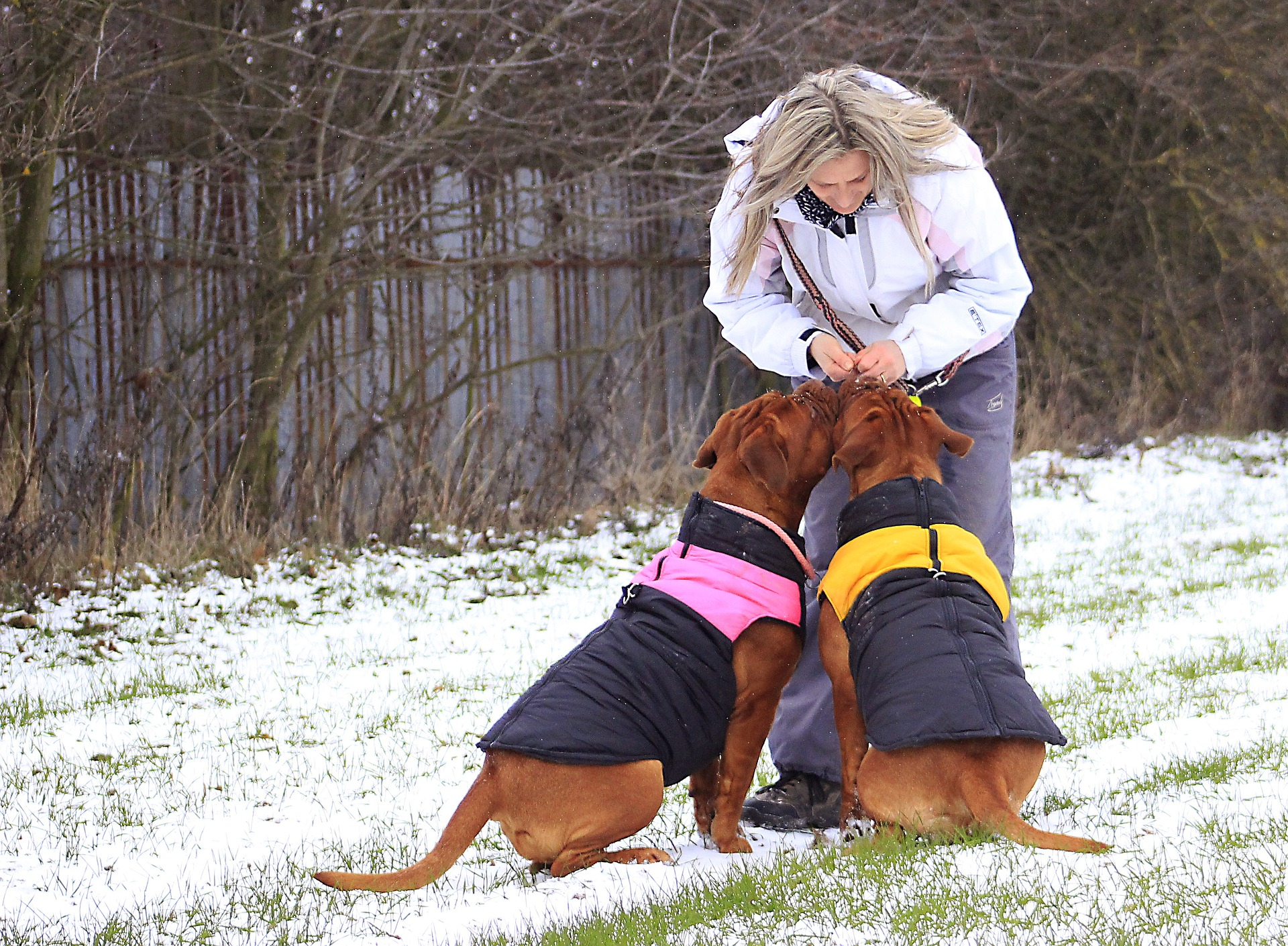 Vyhřívané oblečení pro psy