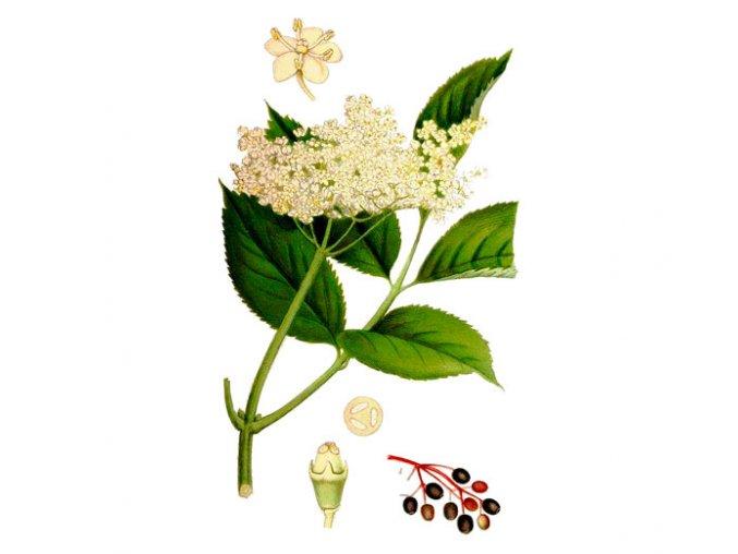 Bez černý květ (Hmotnost 100 g)