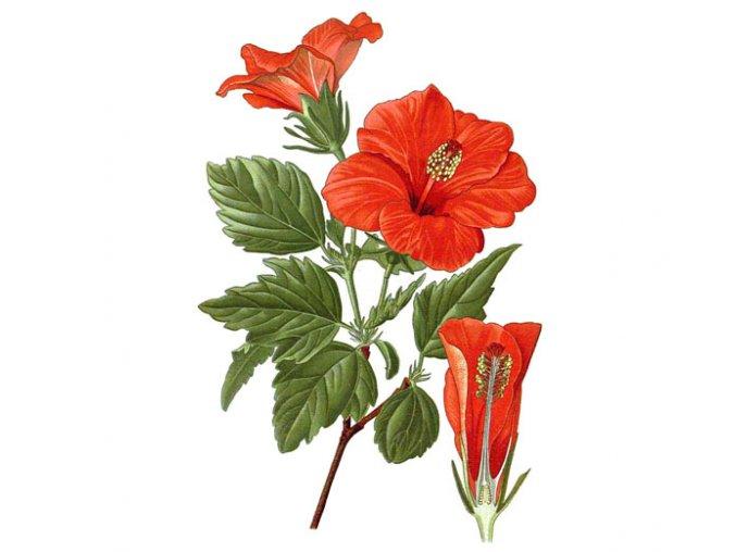 Ibišek květ (Hmotnost 100 g)
