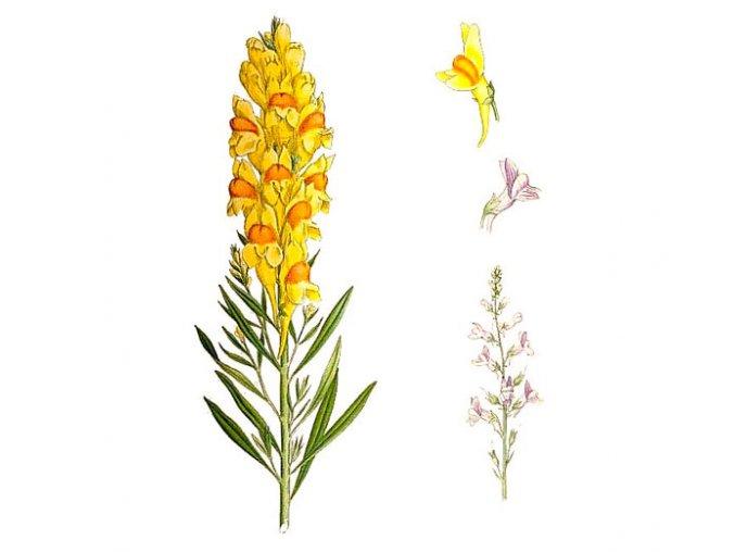 Lnice květel nať (Hmotnost 100 g)