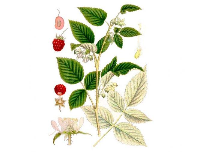 Malina list (Hmotnost 100 g)