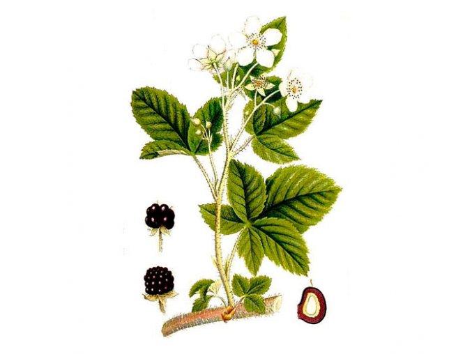 Ostružina list (Hmotnost 100 g)