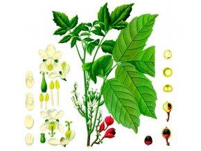 Guarana mletá (Hmotnost 100 g)