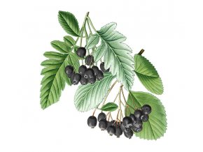 Jeřáb černý arónie plod (Hmotnost 100 g)