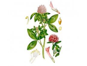 Jetel červený květ (Hmotnost 100 g)