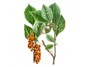 Klanopraška plod (Schizandra) (Hmotnost 100 g)