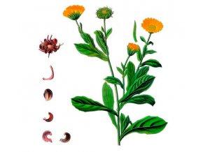 Měsíček květ s kalichem (Hmotnost 100 g)