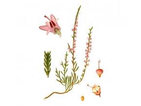 Vřes květ (Hmotnost 100 g)