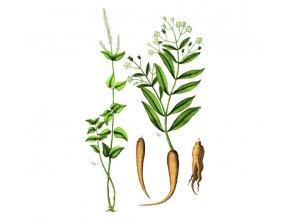 Žen-šen kořen (Hmotnost 100 g)
